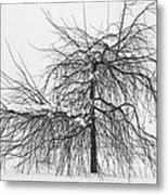 Wild Springtime Winter Tree Black And White Metal Print by James BO  Insogna