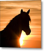 Wild Stallion At Sunrise Metal Print