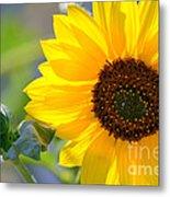 Wild Sunflower Metal Print