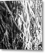 Wild Surface Roots Metal Print by Sandra Pena de Ortiz