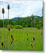 Wild Teasel In Nez Perce National Historical Park-id- Metal Print
