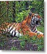 Wild Tiger Metal Print