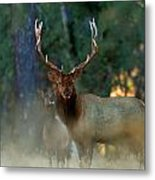 Wild To The Bone Metal Print