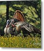Wild Turkey 2 Metal Print