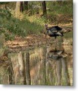 Wild Turkey Crossing Metal Print