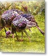 Wild Turkey Hens Metal Print by Barry Jones