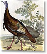 Wild Turkey Metal Print by Titian Ramsey Peale