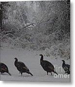 Wild Turkey Winter Metal Print