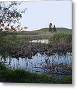 Wild Wetland Metal Print