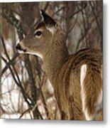 Wild White-tailed Deer Metal Print