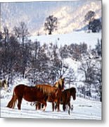 Wild Winter  Metal Print