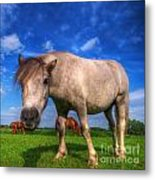 Wild Young Horse On The Field Metal Print