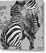 Wild Zebras Metal Print