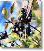Wildberry Plant Metal Print
