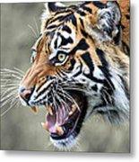 Wildcat II Metal Print
