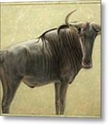 Wildebeest Metal Print by James W Johnson