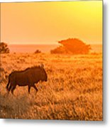 Wildebeest Sunset - Namibia Africa Photograph Metal Print