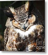 Wilderness Owl Metal Print
