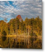 Wilderness Pond 2 Metal Print
