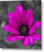 Wildflower 1 Metal Print