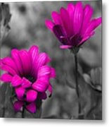 Wildflower 2 Metal Print
