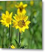 Wildflower Bee Metal Print