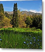 Wildflower Meadow At Descanso Gardens Metal Print by Lynn Bauer