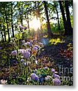 Wildflower Sunset Metal Print