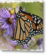 Wildflower Visitor Metal Print