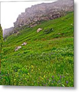 Wildflowers And Mountainous Bluffs At Point Amour In Labrador Metal Print