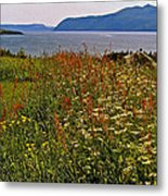 Wildflowers At Lobster Cove Head In Gros Morne Np-nl Metal Print