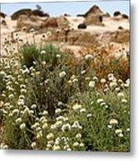Wildflowers At Mungo National Park Metal Print