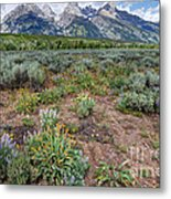 Wildflowers Bloom Below Teton Mountain  Range Metal Print