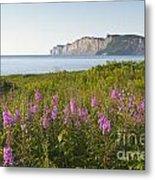 Wildflowers In Gaspe Metal Print