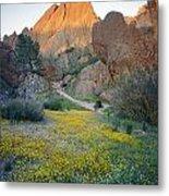1b6430 Wildflowers In Pinnacles National Park Metal Print