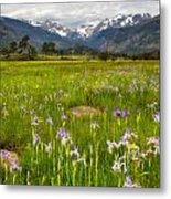 Wildflowers In Rocky Mountain National Park Metal Print