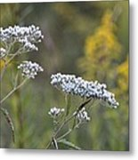 Wildflowers In September 2012 Metal Print