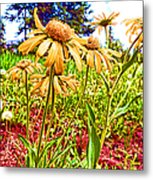 Wildflowers In The Wilds Of Colorado Metal Print