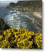 Wildflowers On An Atypical Winter's Day On The Oregon Coast Metal Print