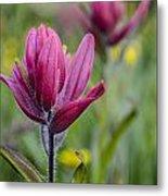 Wildflowers5 Metal Print by Aaron Spong