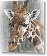 Wildlife Giraffe  Metal Print