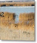 Wildlife Photographer's Dream Metal Print by Loree Johnson