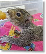 Wildlife Rehabilitation Metal Print