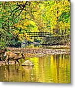 Wildlifes Thirst Metal Print