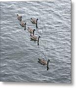 Willamette River Ducks Metal Print