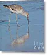 Willet Reflection Metal Print