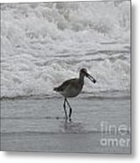 Willet With A Catch Metal Print