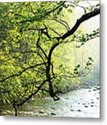 Williams River Mist Metal Print