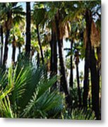 Willis Palm Oasis Metal Print