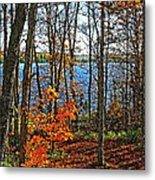 Willow Lake Metal Print by Bill Morgenstern